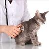 Ветеринарные клиники в Аркадаке